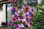 Фото 5 Цветы на даче (60 фото): создаем райский уголок