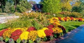 Цветы на даче (60 фото): создаем райский уголок фото