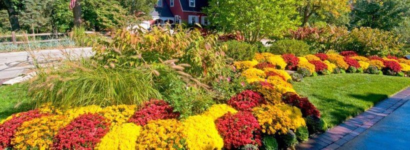 Цветы на даче (60 фото): создаем райский уголок