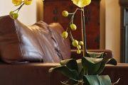 Фото 13 Как ухаживать за орхидеей в домашних условиях: хитрости для регулярного цветения и советы по уходу сразу после покупки