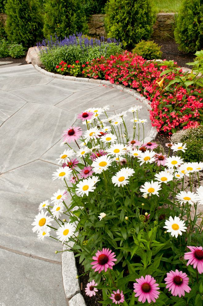 Волнообразная цветочная полоса из ромашек и сальвий