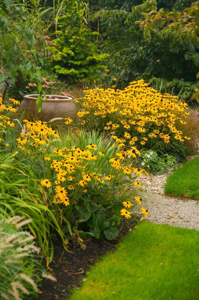 Яркий желтый гелениум создаст солнечное настроение на дачном участке