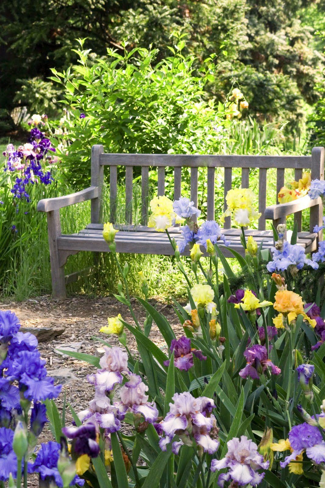 Ирисы, пожалуй, самые традиционные цветы на дачном участке
