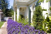 Фото 37 Цветы на даче (60 фото): создаем райский уголок