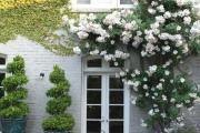 Фото 36 Цветы на даче (60 фото): создаем райский уголок
