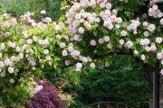 Фото 29 Цветы на даче (60 фото): создаем райский уголок