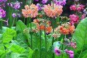 Фото 10 Цветы на даче (60 фото): создаем райский уголок