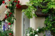 Фото 24 Цветы на даче (60 фото): создаем райский уголок