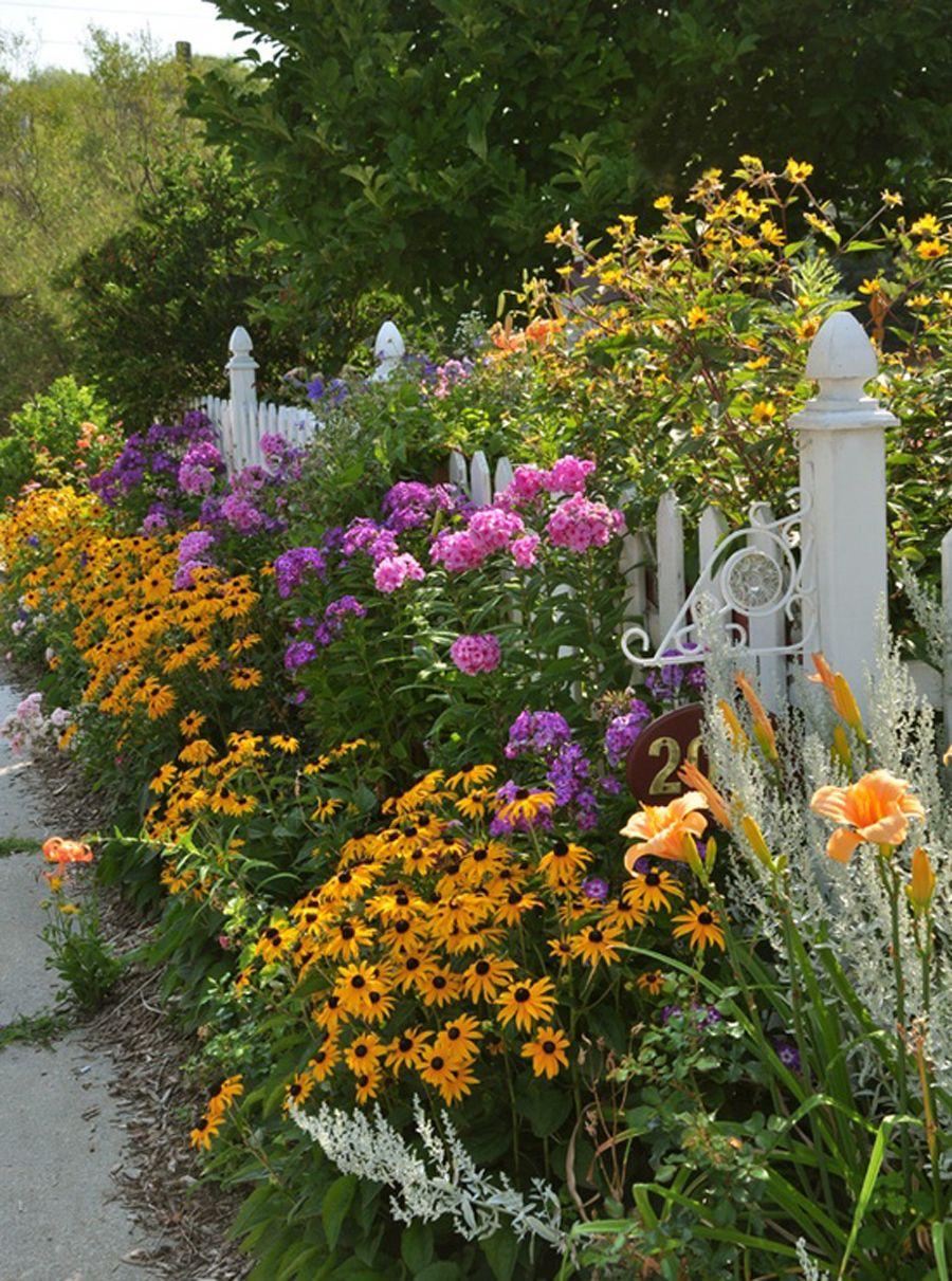 Цветы садовые однолетние, фото и названия 46
