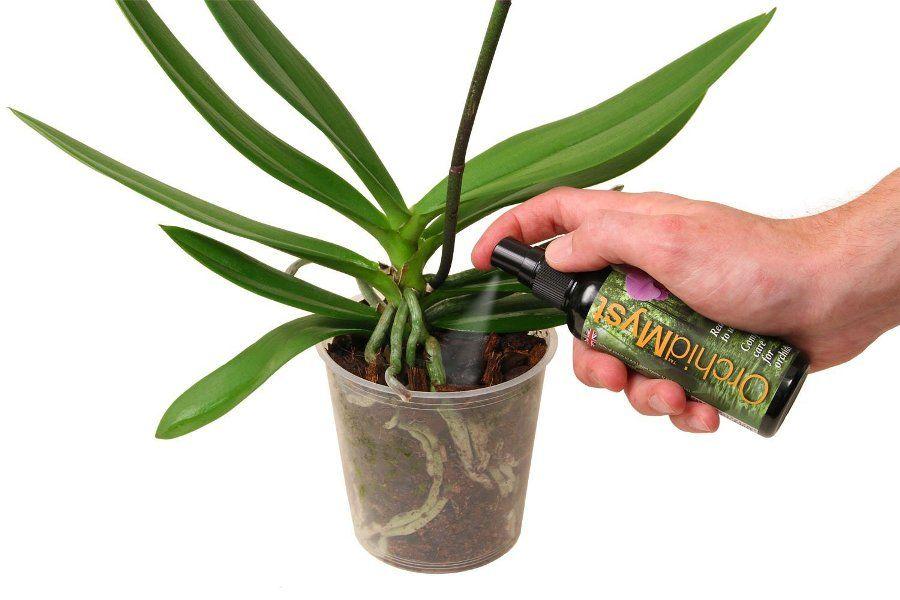 Фото 18 - Подкармливать орхидею нужно только в период роста с интервалом между подкормками в 2-3