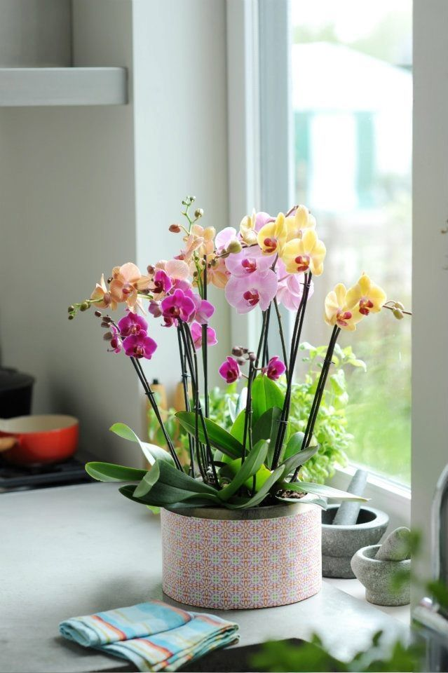 Фото 8 - Орхидеи разного цвета разбавят и украсят ваш интерьер