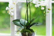 Фото 11 Как ухаживать за орхидеей в домашних условиях: хитрости для регулярного цветения и советы по уходу сразу после покупки