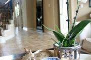 Фото 20 Как ухаживать за орхидеей в домашних условиях: хитрости для регулярного цветения и советы по уходу сразу после покупки
