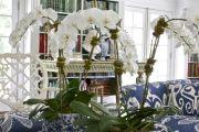 Фото 21 Как ухаживать за орхидеей в домашних условиях: хитрости для регулярного цветения и советы по уходу сразу после покупки