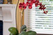 Фото 12 Как ухаживать за орхидеей в домашних условиях: хитрости для регулярного цветения и советы по уходу сразу после покупки