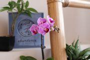 Фото 3 Как ухаживать за орхидеей в домашних условиях: хитрости для регулярного цветения и советы по уходу сразу после покупки