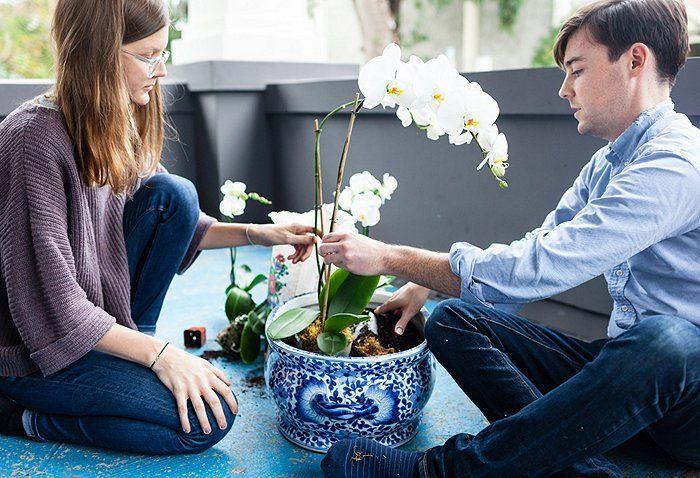Фото 5 - Обычно свежепересаженные орхидеи продолжают цвести