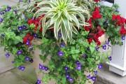 Фото 18 Кованые подставки для цветов (47 фото): достойная опора прекрасному