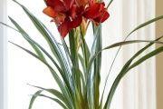 Фото 37 Как ухаживать за орхидеей в домашних условиях: хитрости для регулярного цветения и советы по уходу сразу после покупки