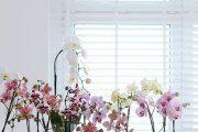 Фото 9 Как ухаживать за орхидеей в домашних условиях: хитрости для регулярного цветения и советы по уходу сразу после покупки
