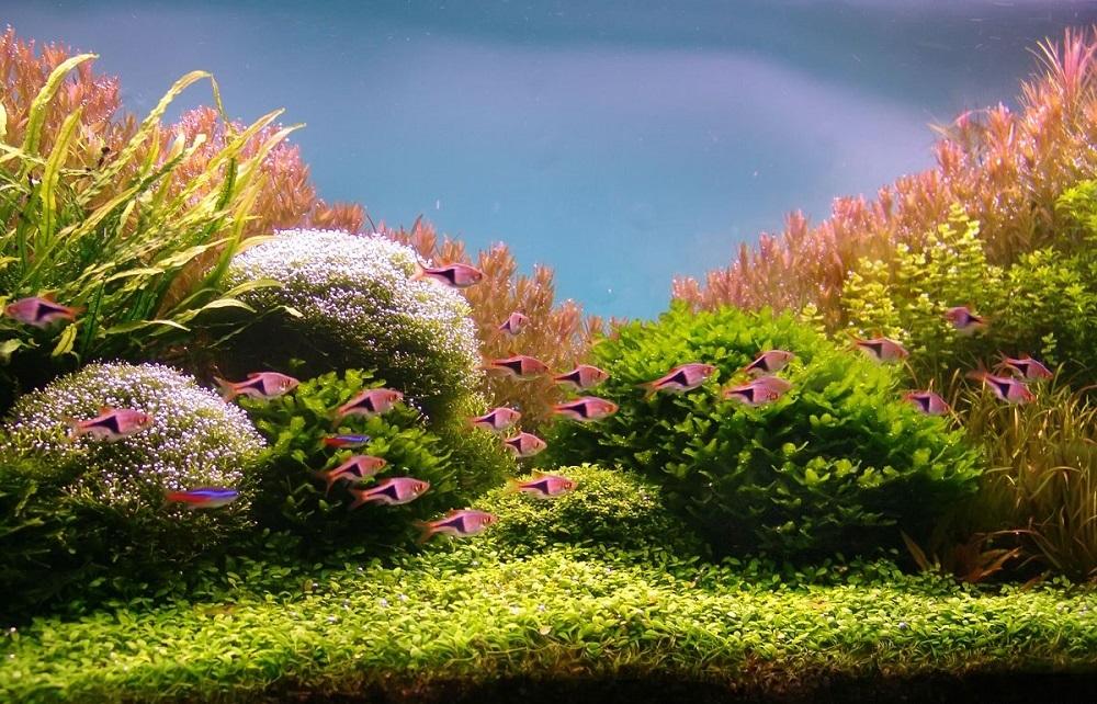Современные аквариумы - это не только уголок живой природы, но полноценное произведение искусства в Вашем доме