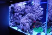 Фото 11 Оформление аквариума своими руками (53 фото): создаем подводное чудо