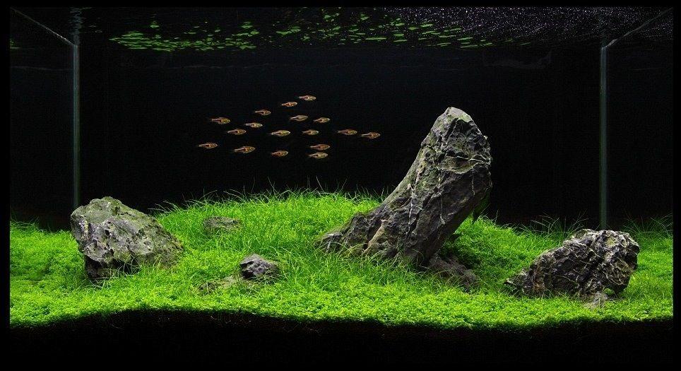 Стая небольших рыбок, плывущих над обломками скал, создает ощущение свободы и простора