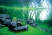 Фото 10 Оформление аквариума своими руками (53 фото): создаем подводное чудо