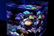 Фото 15 Оформление аквариума своими руками (53 фото): создаем подводное чудо