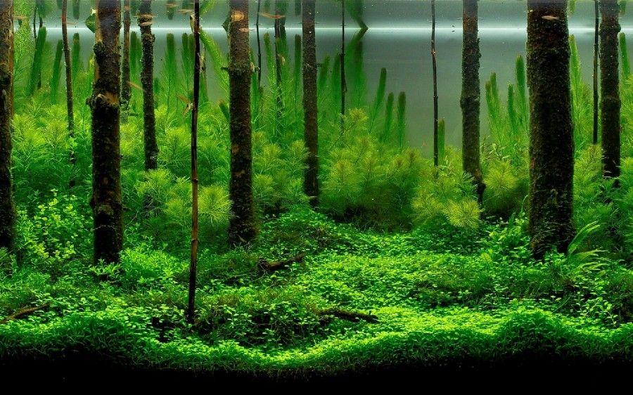 Имитация тропического леса, созданная благодаря корягам и густой зелени