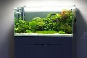 Фото 9 Оформление аквариума своими руками (53 фото): создаем подводное чудо