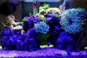 Фото 7 Оформление аквариума своими руками (53 фото): создаем подводное чудо