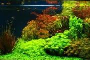 Фото 4 Оформление аквариума своими руками (53 фото): создаем подводное чудо