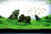 Фото 21 Оформление аквариума своими руками (53 фото): создаем подводное чудо