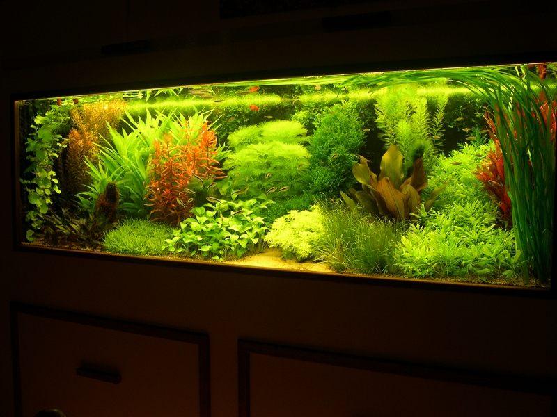 В голландском стиле растения принято разделять на три группы: растения переднего, среднего и заднего планов
