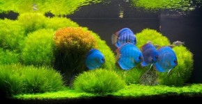 Оформление аквариума своими руками (53 фото): создаем подводное чудо фото