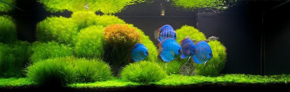 Большой объем аквариума - прекрасное подспорье для дизайнерских экспериментов