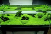 Фото 8 Оформление аквариума своими руками (53 фото): создаем подводное чудо