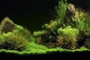 Фото 26 Оформление аквариума своими руками (53 фото): создаем подводное чудо