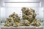 Фото 5 Оформление аквариума своими руками (53 фото): создаем подводное чудо