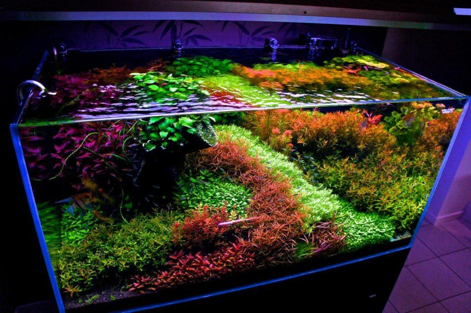 Дизайн аквариума своими руками фото 214