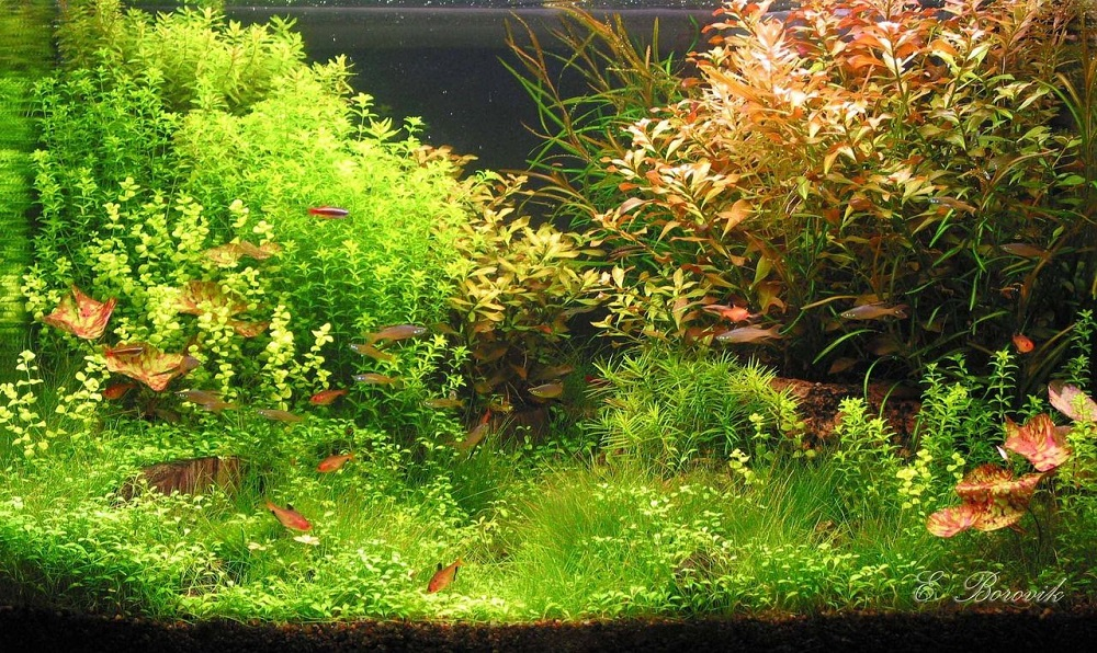 Сочетание растений зеленого и розового цветов создает удивительно успокаивающий контраст