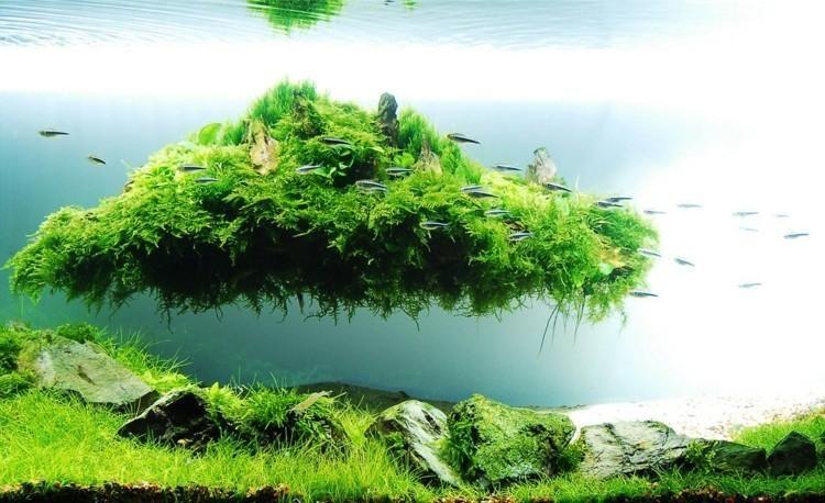 Яванский мох используется для создания растительности на подводном плавающем острове