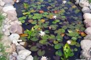 Фото 10 Декоративный пруд (55 фото): красота и комфорт своими руками