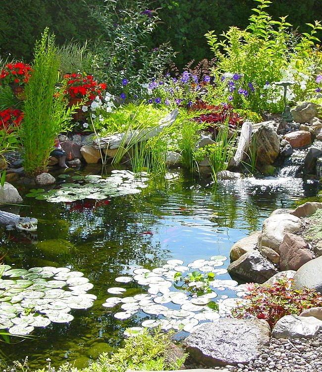 Яркие цветы на берегах у водоема