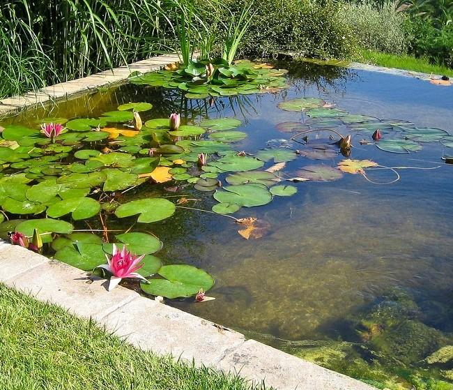 Искусственный водоем в форме квадрата с розовыми водяными лилиями