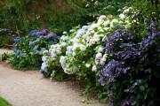 Фото 20 Гортензия (60 фото) — королева в вашем саду: виды и особенности ухода