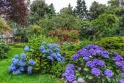 Фото 24 Гортензия (60 фото) — королева в вашем саду: виды и особенности ухода