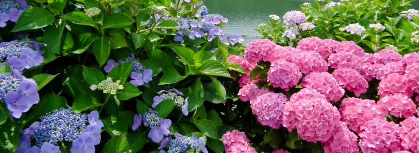 Цветы для сада и огорода - Фотостатьи