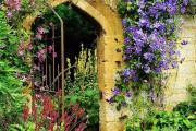 Фото 22 Клематисы в ландшафтном дизайне (45 фото): роскошное украшение двора